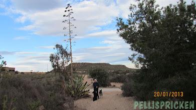 Photo: En Aloe Vera odling fanns i Trädgården. Här står jag bredvid bladen och blomman det är den där som syns uppe bland molnen. Aloe Verablomman!