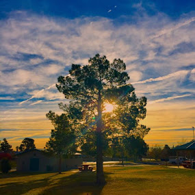 Sunrise by Diane Garcia - Instagram & Mobile iPhone ( tree, sunrise,  )