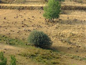 Photo: Aralla de Luna - hundreds of sheeps and goats