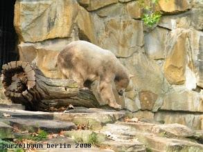 Photo: Kletterpartie auf dem Baumstamm ;-)