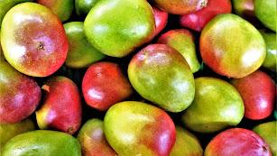 El mango, un producto tropical que se cultiva en Andalucía.