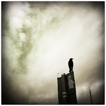 Photo: This is for #SquareSunday and #skysunday  #iphoneography #hoodedcrow #hipstamatic
