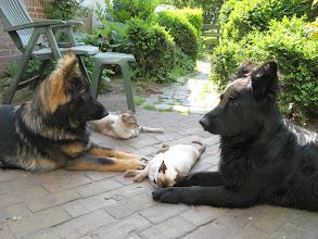 Photo: Zie Aiki en Angel naar elkaar kijken en samen denken.....