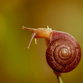 snail by Brothers Photography - Animals Other (  )