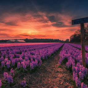 No access by Henk Smit - Flowers Flower Gardens (  )