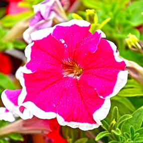Pink & White Flower by Umair Nayab - Flowers Flower Gardens ( pink flower, white flower, greenery, plants,  )