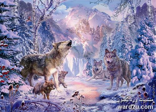 حيوانات متوحشة من الغابة الى الحضر Jan Patrik Krasny