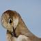 Birds eye.jpg