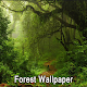 Download Forest Wallpaper For PC Windows and Mac