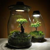 Design And Benefits Of Terrarium Plants Android APK Download Free By UlLi Apps