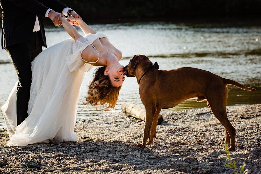 Wedding photographer Sabina Mladin (sabina). Photo of 20.12.2018