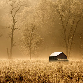 Foggy Morning by Aaron Shaver - Landscapes Prairies, Meadows & Fields ( field, barn, fog, mood, morning, landscape, light, golden, country,  )