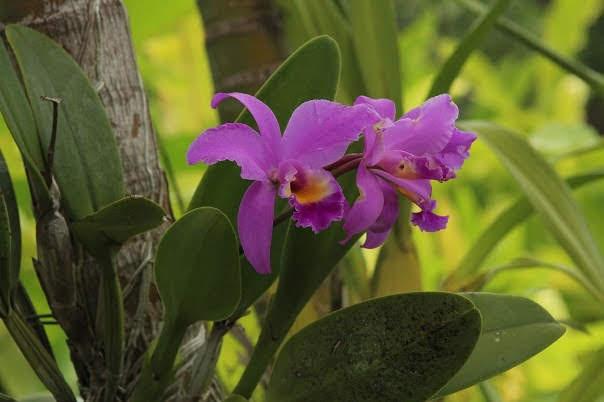 Bali-Orchid-Garden