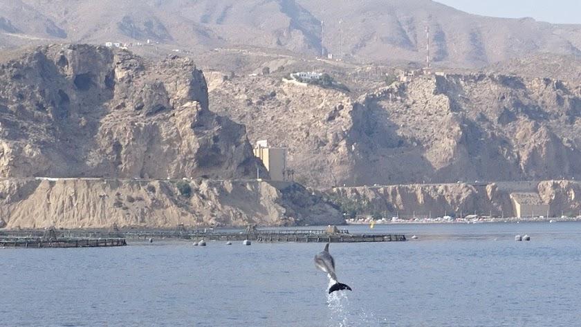Foto de delfines publicada por Promar en su cuenta de Facebook.