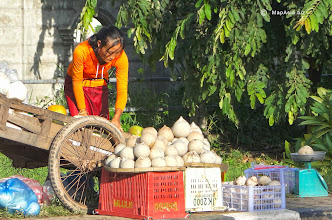 Photo: Coconuts for sale
