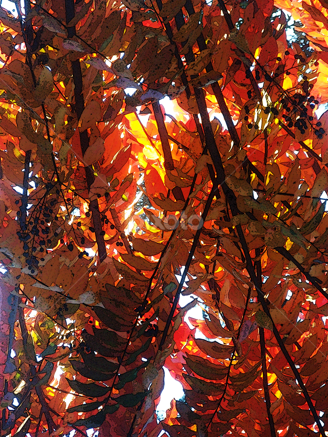 Red and Yellow Leaves by Edward Gold - Digital Art Things ( digital photography, red leaves, nature, artistic, yellow leaves, colorful, digital art,  )