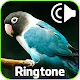 Ringtone Suara Burung Download on Windows