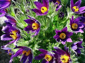 Photo: inne kwiatki
