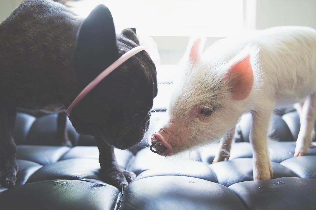 Дискотека открытки, картинки с новым годом собака и свинья