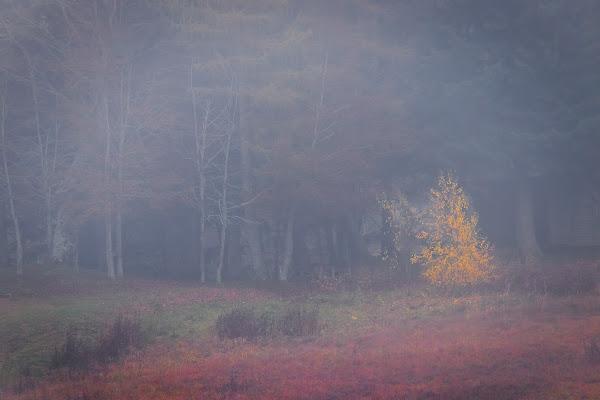 Magic in the mist di SG67
