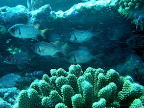 Photo: Soldier Fish