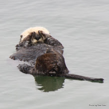 Photo: (Year 3) Day 20 - Otter Floating #2