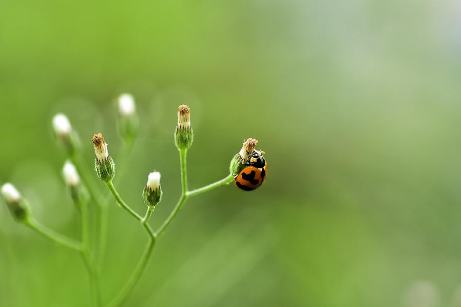 by Mo Monaris - Nature Up Close Webs