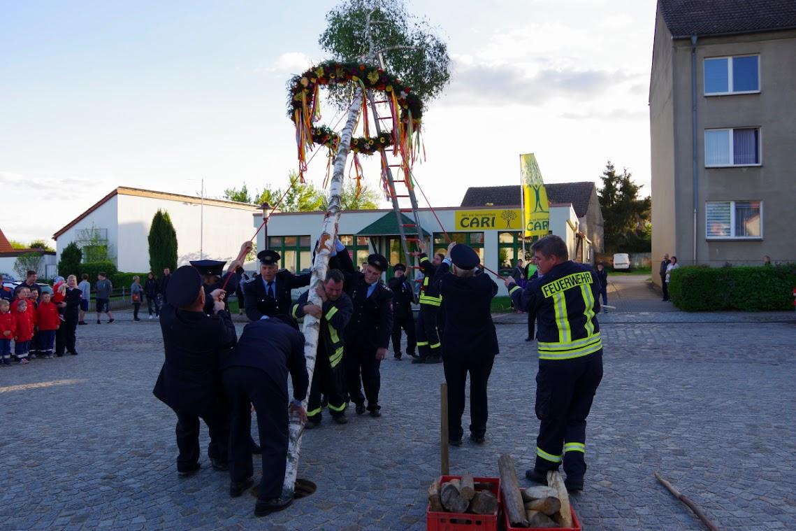 Mit viel Kraftaufwand wurde der Maibaum aufgestellt. Foto: Andreas Schwarze/TWP