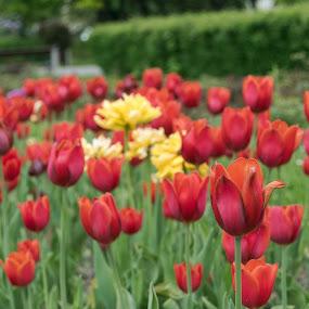 by Gino Libardi - Flowers Flowers in the Wild ( flower photography, flowers, flower closeup, flowering, flower )