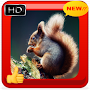 Squirrel Photo Frames APK icon