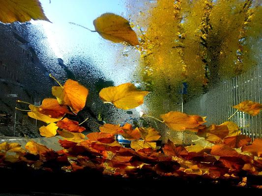 Come foglie... di Arthemisia