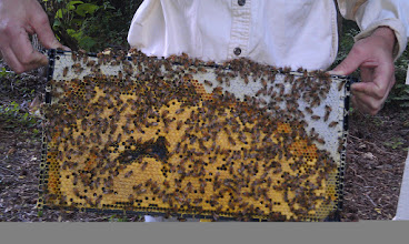 Photo: white capped honey, pollen band (orange) and more capped brood (yellow)