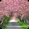 Blooming Tree Full HD Wallpaper APK