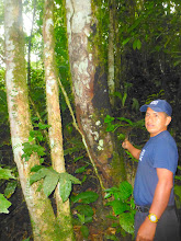 Photo: Our guide, Juan Carlos, shows the tree that gives yellow dye