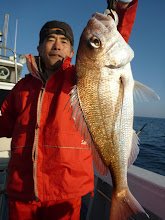 Photo: いいサイズの真鯛!