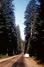 Photo: 74. This picture, and the one which follows, were taken about a mile apart. This picture is taken on the drive toward Mt. Rainier National Park, as one passes through a State Park.* [*This would be Federation Forest State Park. -ed]