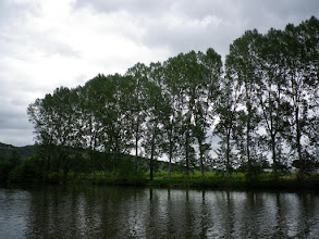 Photo: Riverside plantation