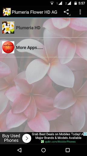 Plumeria Flower Wallpaper HD