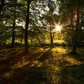 Sunset by Paul Morley - Landscapes Sunsets & Sunrises