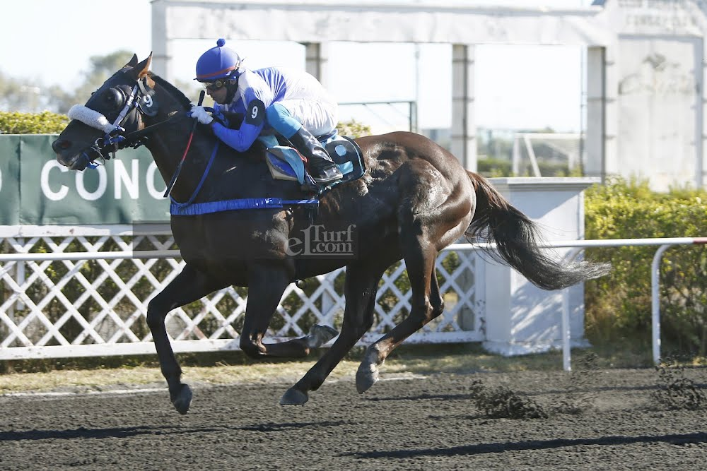 Gran Mati (Aragorn) se impuso en Handicap (1300m-Arena-CHC). - Staff ElTurf.com