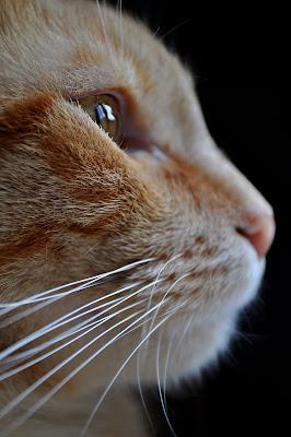 Portrait di carla_g