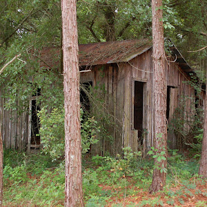 071-Found In The Woods.JPG