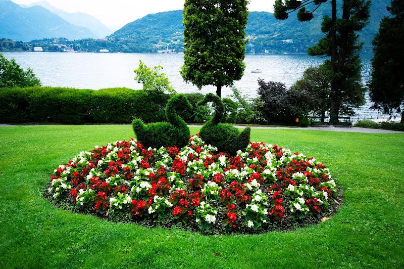 sbocciano fiori, colori e....amore.... di Francesco Di Maio
