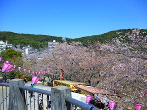Photo: 長崎で有名な、お花見の名所です。 ・・・初めてきました。