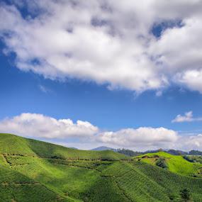 tea plantation by Rusydi Ali - Novices Only Landscapes