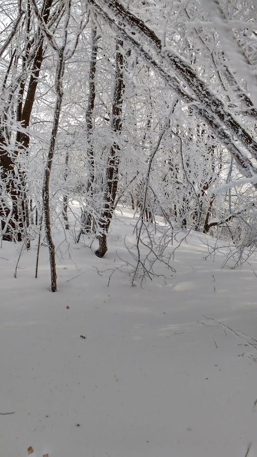 Пътека през гората
