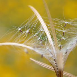 waiting for the wind by Sue Rickhuss - Nature Up Close Leaves & Grasses