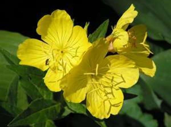 Evening Primrose (10% GLA) {Oenothera Biennis}: As this oil is high in Gamma Linoleic...