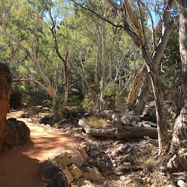 The trail to Simpsons Gap by Dawn Simpson - Landscapes Caves & Formations ( northern territory, simpsons gap, alice springs, gap, tourism., geographical formation )