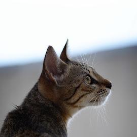 by Ivanka Ruter - Animals - Cats Portraits